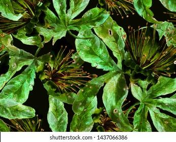 Bold Floral Design. Large Hawaiian Seamless Print on Green Background. Big Hawaiian Spring Watercolour Lilikoi Endless Background. Artistic Bold Floral Design.