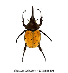 Bombardier Beetle Animal Realistic Illustration