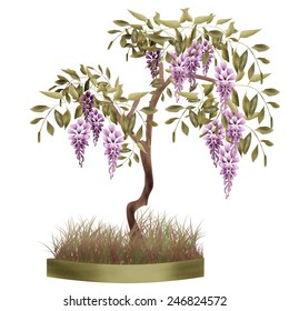 Bonsai potted tree with flowers of wisteria glicinia background isolated