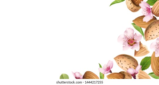 Border with almond nuts and pink flowers. Realistic illustrations of almond nuts, leaves, and pink blossoms. Horizontal text holder for banner or page.