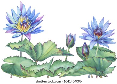 Border of blue Egyptian lotus with leaves, bud (Nymphaea caerulea). Watercolor hand drawn painting illustration isolated on white background.