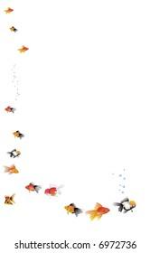 border fishes