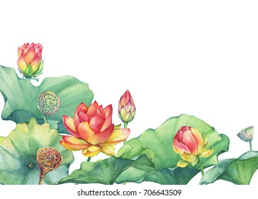 Border, frame of pink sacred lotus flower with leaves, seed head, bud (water lily). Watercolor hand drawn painting illustration isolated on white background.