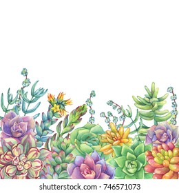 Border with leaves, succulent, cactus. Succulents collection. Watercolor hand drawn painting illustration isolated on white background.
