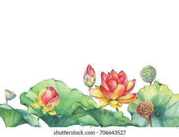 Border, poster of pink Indian lotus flower with leaves, seed head, bud (water lily). Watercolor hand drawn painting illustration isolated on white background.