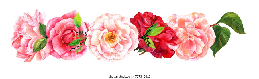 A border of watercolour roses, camellias, peonies, hand painted in the style of vintage botanical art on a white background, isolated, a design element for a wedding invitation or birthday card