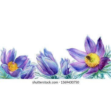 Border with wild flower purple Pulsatilla patens (also known as Eastern pasqueflower, prairie crocus, cutleaf anemone). Hand drawn watercolor painting illustration isolated on white background.