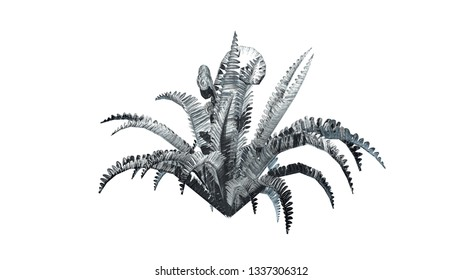 Boston fern in the winter - isolated on white background - 3D illustration