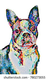 Boston Terrier Design