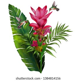 Botanical art green natural leaf  red pink flower birds tropical hand drawing digital painting water  Color pencil style white background