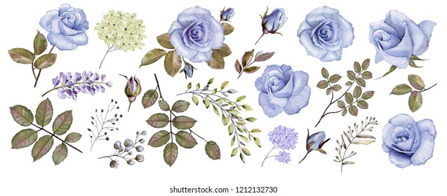 Botanical collection of blue roses. Set: flowers, roses, leaves, twigs, buds. Watercolor.