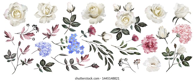 The Botanical collection of the white roses. Set: flowers, chrysanthemum,forget-me-nots, roses, hydrangeas, leaves, twigs, buds. Watercolor.