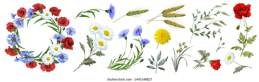 Botanical collection of wild flowers: blue cornflowers, dandelions, red poppies, spikelets, flowers, white daisies, leaves, twigs, buds. Flower frame, wreath. Watercolor.