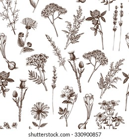 Botanical design with hand drawn spices and herbs. Decorative colorful background with vintage medicinal herbs sketch. Herbal seamless pattern