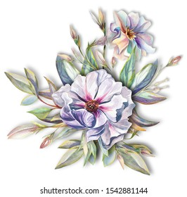 Botanical floral arrangement of peonies, acacia flowers,herbs and leaves hand drawn in watercolor isolated on white background. Watercolor illustration. Ideal for creating invitations, wedding cards