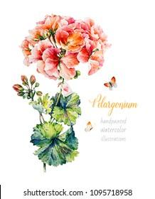 Botanical Geranium. Watercolor Illustration