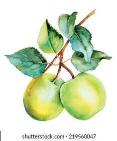 Botanical green apples tree watercolor