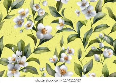Botanical illustration. Floral print. Jasmine flowers.
