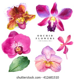 Botanical illustration with realistic tropical flowers and leaves. Watercolor collection of orchid. Handmade painting on a white background. Spa style. Violet flowers.