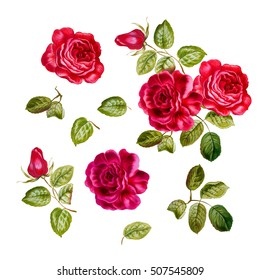 Botanical illustration of red roses  with leaves. Set of hand drawn watercolor elements
