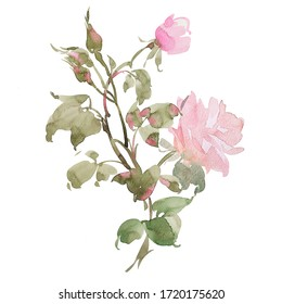 botanical illustration. this picture can be used as background, decoration or object.jpg