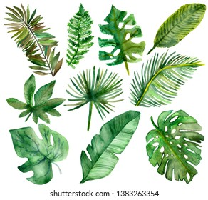 Botanical illustration of tropical plants for beautiful design. Watercolor painted tropical branches with green leaves. For spring or summer in for an invitation, wedding or greeting card.