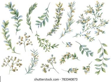 Botanical illustrations. Floral set. Watercolor illustration.