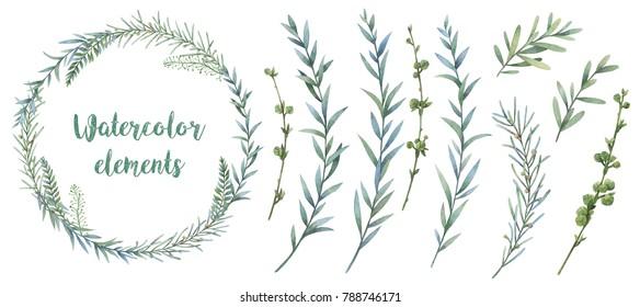 Botanical illustrations. Floral set. Watercolor wreath.