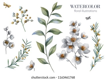 Botanical illustrations. Jasmine flowers. Floral set.