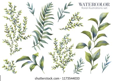 Botanical illustrations. Watercolor greenery. Floral set.