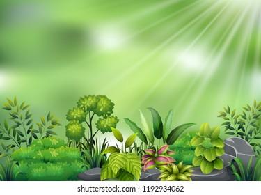 Botanical plant view on sun light