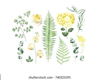 Botanical set of eucalyptus branches, fern and yellow flowers isolated on white background. Watercolor hand drawn illustration.