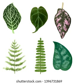 Botanical Set Leaves Realistic Illustration
