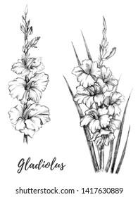 Outline Gladioli Drawing