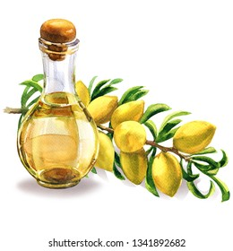 Bottle of argan oil and fresh argan tree, Argania spinosa, branch with fruits, nuts on a branch, skin care, moroccan cosmetic, isolated, hand drawn watercolor illustration on white background