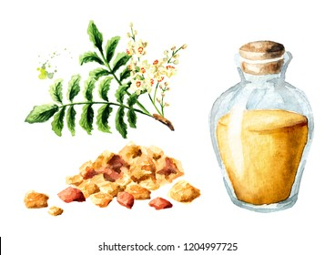 A bottle of frankincense essential oil with frankincense resin and boswellia leafes and flowers set. Watercolor hand drawn illustration,  isolated on white background