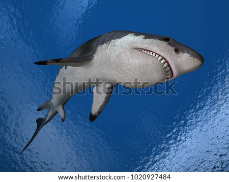 computer shark