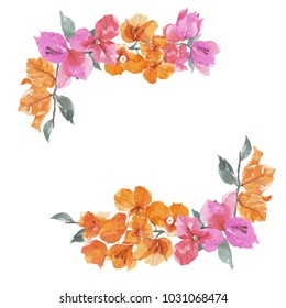 Bougainvillea flower, Watercolor painting isolated on white background.