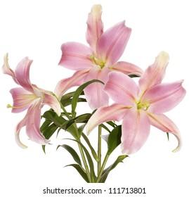 Bouquet beautiful decorative light pink lily