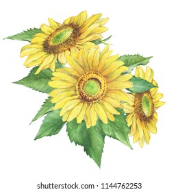 Bouquet, composition with yellow flower of agriculture plant sunflower (also known as Helianthus annuus). Watercolor hand drawn painting illustration isolated on a white background