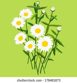 Bouquet of daisies with leaves, buds and blossoming flowers