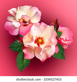 A bouquet of delicate red and cream roses on a red background. As a separate element of greeting card and invitation cards, as well as perfume label