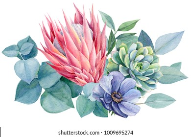 bouquet of exotic flowers, watercolor painting, hand drawing, protea, eucalyptus leaves, anemone blue, succulent