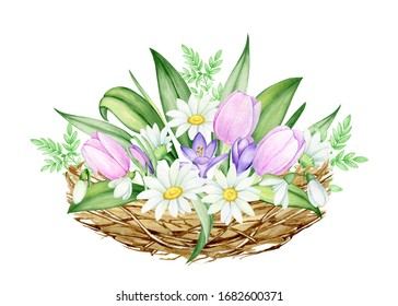 A bouquet of flowers, from daisies, tulips, snowdrops, crocuses in the nest. Watercolor, spring clip art, on an isolated background, for the Easter holiday.
