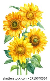 bouquet of flowers, sunflowers on an isolated background, botanical illustration, watercolor floral design