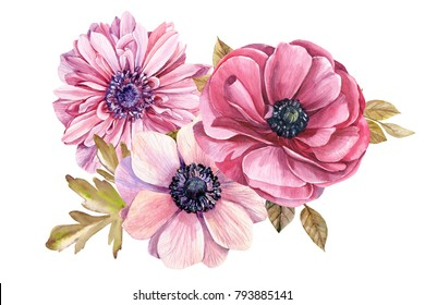 bouquet of flowers in vintage style, watercolor hand drawing, botanical painting anemones, ranunculus