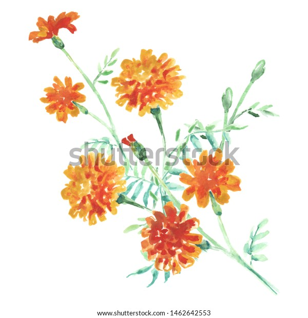 French Marigold Clip Art