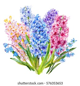 Bouquet with hyacinth and Scylla. Watercolor