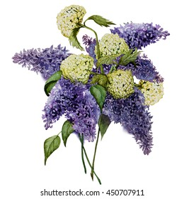 a bouquet of lilac and snowball tree. watercolor.  botanical illustration. This image can be used for postcards invitations flyers.