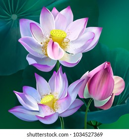A bouquet of luxurious lotuses, against the background of green leaves, the Kingdom of peace and serenity. The personification of life. Flower growing in the Hawaiian Islands